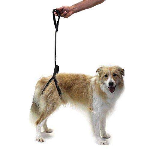 Ortocanis Tragehilfe für Hunde