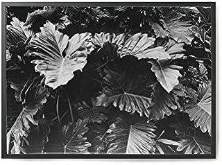 Coco Lapine ポスター/アートプリント 50×70cm Botanical no.3