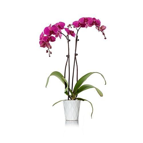 ddd206af0a4 Just Add Ice 304209 Orchid 5