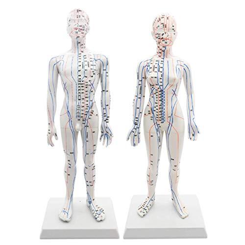 SHUAI Modello di Agopuntura Uomo Donna, Punto di Massaggio Dell'attrezzo di Insegnamento Spiegazione Comunicazione Medico-Paziente Exhibition Hall 50Cm / 48Cm