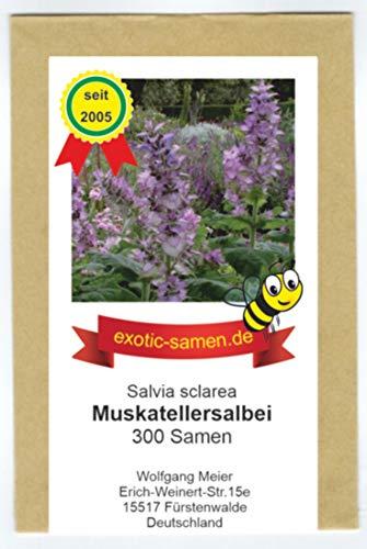 Bienenweide - Muskatellersalbei - Salvia sclarea - 300 Samen