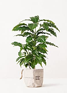 HitoHana(ひとはな) コーヒーの木4号 ラップサック