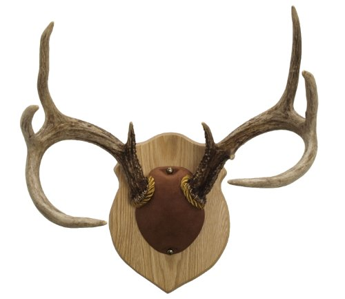Top 10 elk european mount kit for 2021