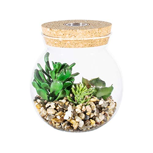 Small jar glass terrarium with light