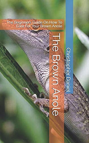 The Brown Anole: The Beginners Guide On How To Care For Your Brown Anole
