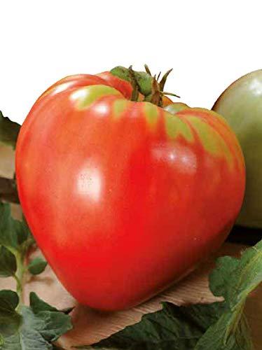 Germisem Bio Oxheart Graines de Tomate 0.5 g ECBIO8009 Multicolore