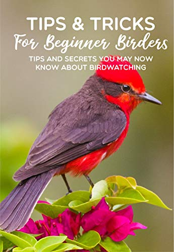 Tips & Tricks For Beginner Birders Tips And Secrets You May Now Know About Birdwatching: Bird Identification Tips (English Edition)