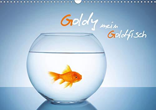 Goldy - mein Goldfisch (Wandkalender 2021 DIN A3 quer)