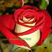 100ローズ種子9パック各色100種子 - diyホームガーデニングポットバルコニー&ヤード香りのよい花植物盆栽装飾