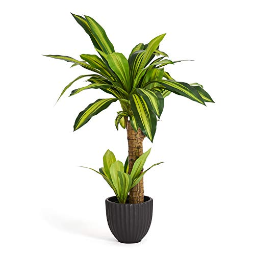 4Ever Green Artificial Realistic Dracaena Dragon Plant Dracena Tree Fake Tall Plant for Home Room Indoor Outdoor Decoration in Plastic Pot, 75 cm