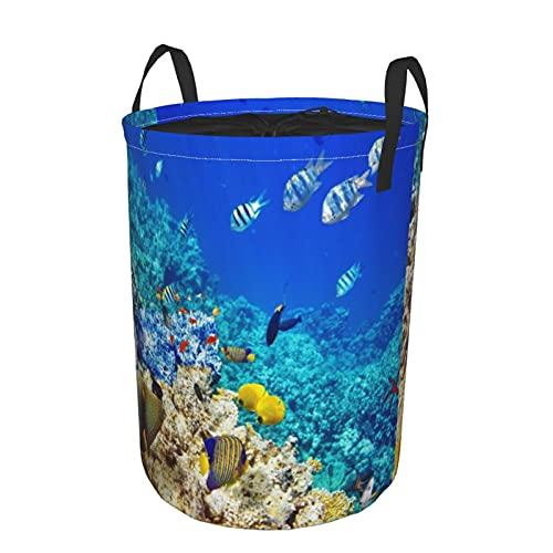 Cesta de almacenamiento, transparente Sea Animal World Corales, peces tropicales y estrellas de mar, mar egipcio, cesto de lavandería grande plegable con asas 19'x14'