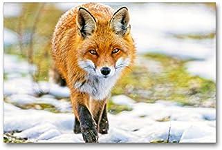 Premium Textil lienzo 90 cm x 60 cm horizontal se mueve un zorro sobre una pradera cubierta de nieve, imagen en rojo zorro (vulpes vulpes) (CALVENDO Tiere);CALVENDO Animales