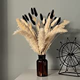 Pampas Grass Stems Black White Bunny Tail Dried Flowers 17.8 Inch Boho Style Bouquet Tall Reed Grass Plume Natural Bouquet for Home Decor and Wedding Centerpiece