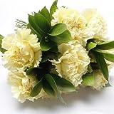50 Piezas De Semillas De Clavel Amarillo Cultivan Sus Propias Flores De Jardín De Reliquia Perenne Exuda Fragancia Atrayendo Mariposas Abejas