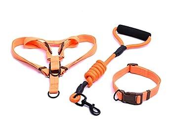 AMDXD Ensemble Harnais et Collier de Laisse Orange Nylon Ensemble Harnais, Laisses et Colliers pour Chien Corde S