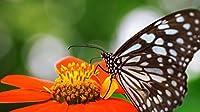 花の蝶大人と子供のための1000ピースのジグソーパズルチャレンジゲーム