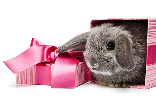 Puzzles para Adultos Rompecabezas de 500 Piezas, Educativo Intelectual Descomprimiendo Juguete Divertido Juego Familiar -Conejo de Pascua