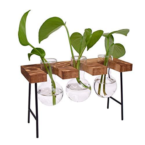 DEDC - Vaso da tavolo in vetro con supporto in legno massiccio retrò per piante idroponiche, decorazione da giardino (3 lampadine)