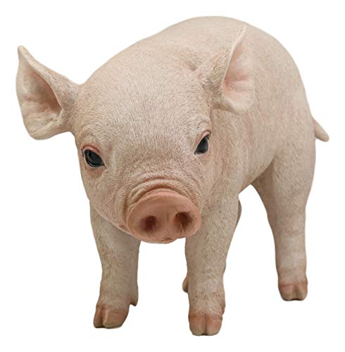 Ebros Large Adorable Realistic Animal Farm Babe Pig Statue 15  Long Rustic Country Piggy Piglet Pet Pigs Collectible Figurine