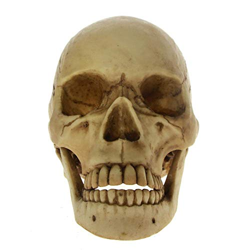 Mnjin Decoración del hogar Escultura Estatua Ornamento de la Estatua Escultura de la Vida Silvestre Horror de Halloween Vida Cráneo Muerto con mandíbula móvil Esqueleto Cabeza de Cranmiun con crán