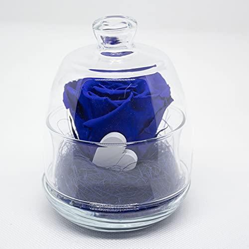 Rosa conservada azul en campana de cristal. Rosa eterna azul con corazón...