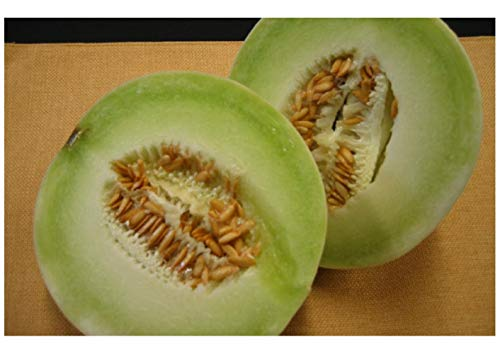 Premier Seeds Direct MEL06 migliori semi di melone al miele (confezione da 1000 pezzi)