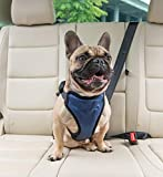 A French bulldog sits in the backseat of a car wearing a seatbelt.