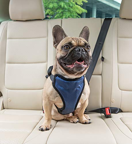 PetSafe Happy Ride Certified, Crash-Tested, Comfortable, Durable, Dog Safety Harness for Pugs