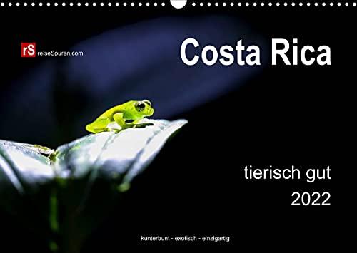 Costa Rica animal bueno 2022