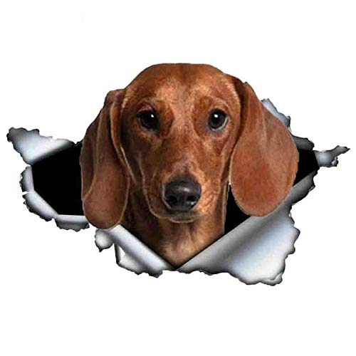 ZXiaoBai Car stickers and decals  Tan Dachshund Dog Torn Metal Car Sticker Waterproof Decal Laptop Suitcase Truck Motorcycle Car Accessories PVC 13cmx8cm-F Style