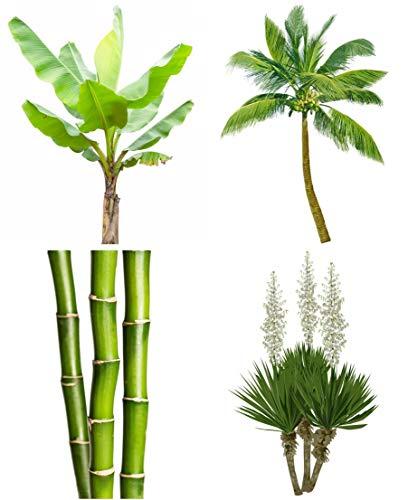 Freiland Mix - extremst frosthart - 11 Arten je 10 Samen - Palmen - Bananen - Bambus ...
