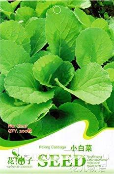 VISTARIC Hongkong Ice Berg graines de laitue, emballage d'origine, 5G Seeds, Vert non ogm laitue romaine, les légumes Salade verte # BN00009