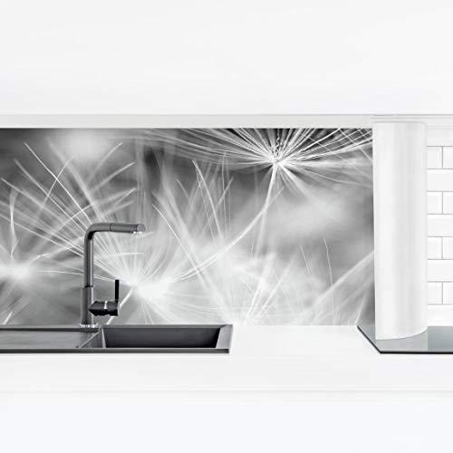 Küchenrückwand Panorama selbstklebend Hochglanz - Pusteblume blühende Pflanze Natur Blätter Blüten Blumen Blütenblatt Blumenmuster Floristik Smart 60 x 210 cm