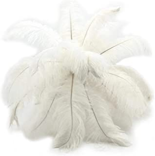 Best ostrich feather displays Reviews