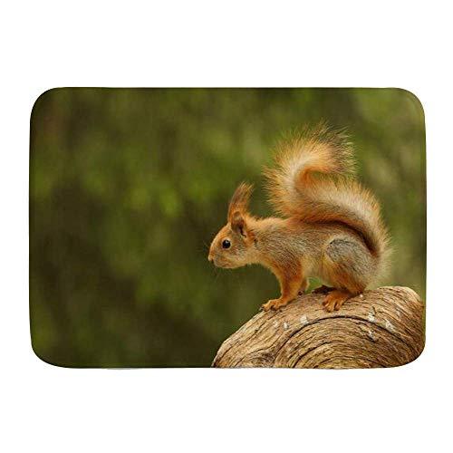 Kcmical Badematte Teppich, Eichhörnchen sitzen Waldtiere Wildlife Evening Nagetier, Plüsch Badezimmer Dekor Matten mit Rutschfester Rückseite 40 * 60Cm