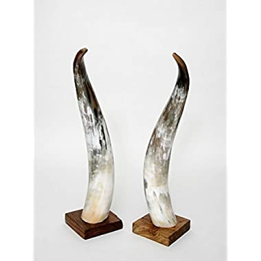 Brillibrum Flyer Fine Bull Cow Horns Polished Hunting Antlers