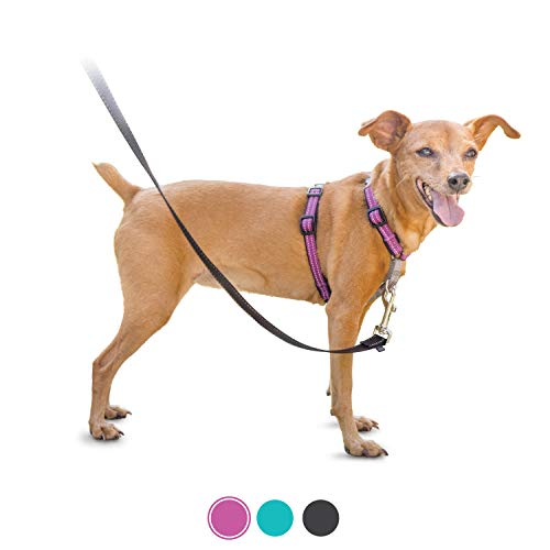 PetSafe 3in1 Harness, from The Makers of The Easy Walk Harness, Fully Adjustable No-Pull Dog Harness,Plum,Extra Small