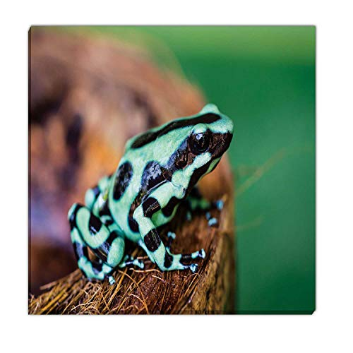 Hitecera Green and Black Poison Dart Frog,Wall Art Decals Costa Rica Wall Art for Kitchen 19''x19''
