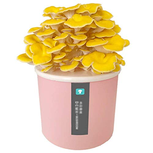 DRSM Grow Your Own Bonsai Kit, para niños y Principiantes, Alrededor de 15-25 días, Kit de Semillas único Idea de Regalo Seta de ostra Rosa-Blanca