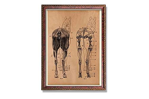 MG global Póster anatómico de caballo vintage con impresión de anatomía médica, para decoración de pared, regalo médico, regalo veterinario, diseño de esqueleto
