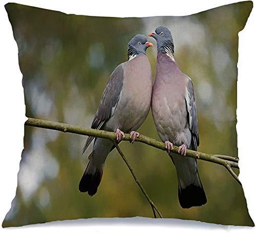 Funda de almohada Paloma de madera Columba Palumbus natural Demostrar una linda pareja de enamorados Animales Vida silvestre Naturaleza Beso Lanzamiento de Cómoda funda de cojín para silla de coche So