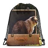 Rasyko British - Maleta de equipaje para gato de pelo corto con...