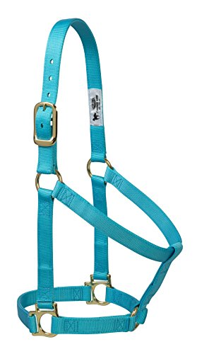 "Weaver Leather Basic Non-Adjustable Nylon Horse Halter, Turquoise, 1"" Average Horse"