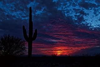 Landscape Scenery Nature Art Print Poster (Canvas, 24x35)- Tucson arizona cactus night sky