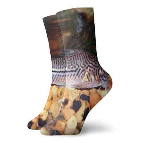 Julli Catfish Tropical Cory Animals Unisex Fashion Casual R&halssocken Kleid Socken 30 cm