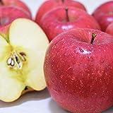 りんご 5kg 長野県 平均糖度13度前後 長野県産 秋映 (あきばえ) 西村青果