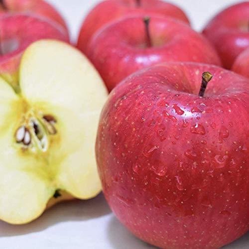 りんご 5kg ( 11~20個 ) 長野県 平均糖度13度前後 長野県産 サンふじ 西村青果