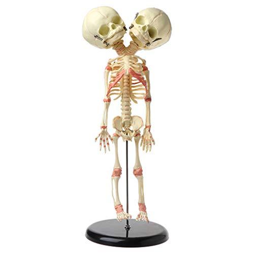 Wenjuersty - Esqueleto de 37 cm para niños