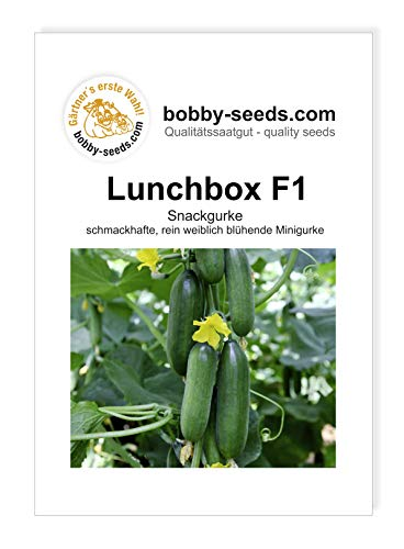 Lunchbox F1 Snackgurkensamen von bobby-seeds Portion