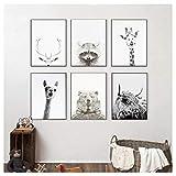 Wwjwf Lama Noir Et Blanc Impression Pépinière Décor Wall Art Bébé Chambre Affiche Animal Drôle Girafe Vache Raton Laveur Photos Enfants Enfants Cadeau 30X40Cmx6 sans Cadre